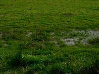 campo_lluvia